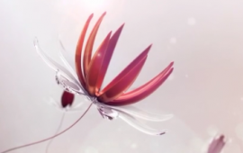 全息投影片源免费下载 花的世界 (363播放)