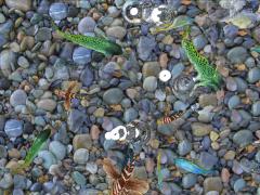 山东济南全息展柜,全息膜,沉浸式花海餐厅,互动投影游戏 (0)