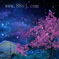 花草树木,梦幻丛林,森林全息投影素材,梦幻浪漫素材
