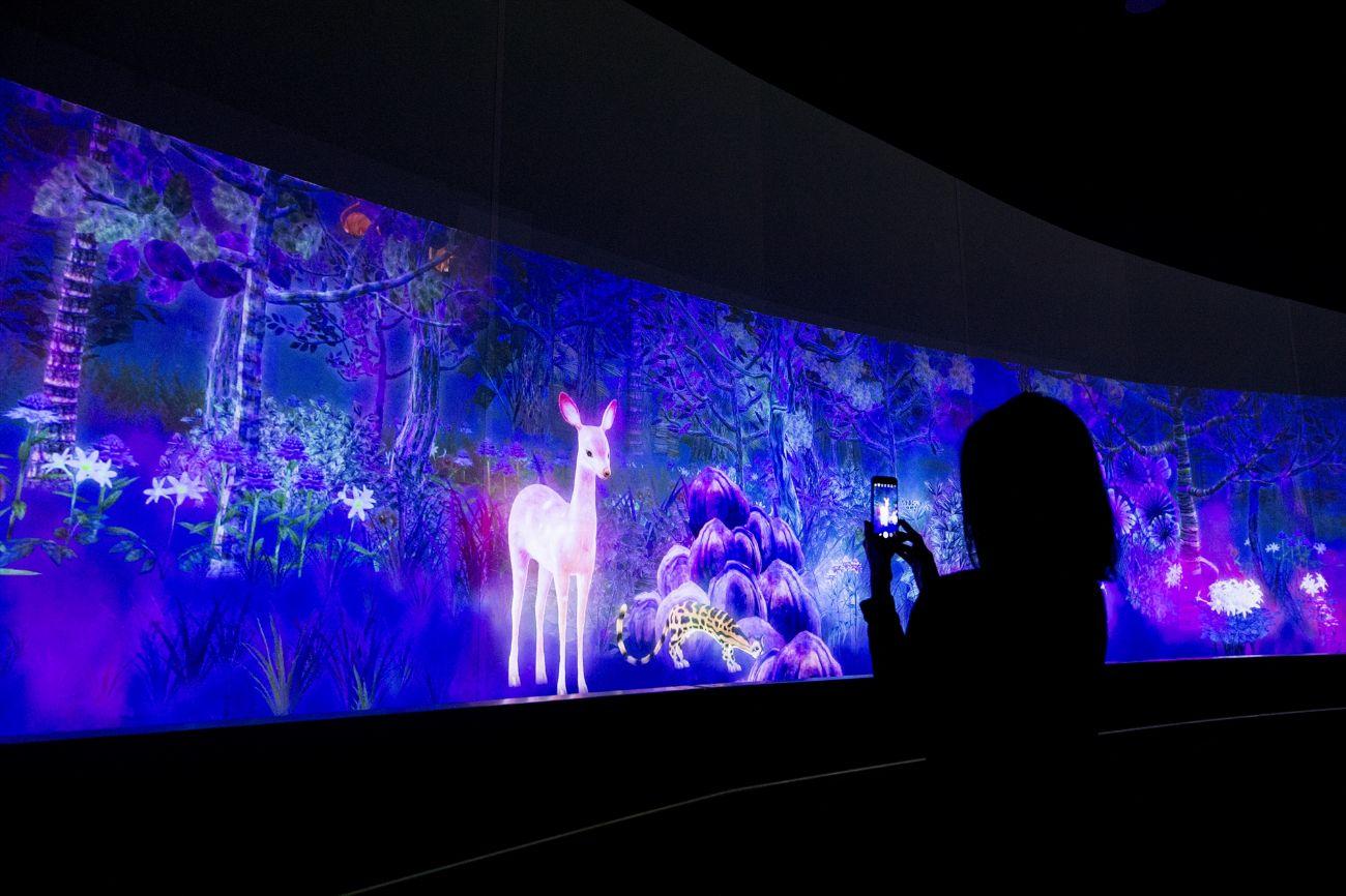 数字多媒体展览展示公司,倾影科技